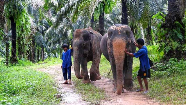 Go to Krabi Elephant Sanctuary