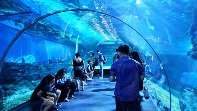Go underwater at the Sea Life Bangkok Ocean World